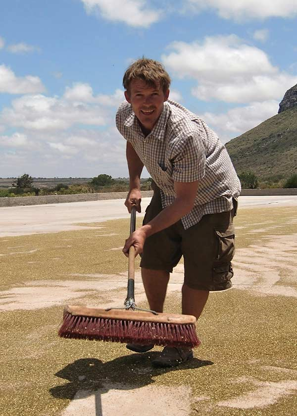 Ryan Harvey sweeping Rooibos